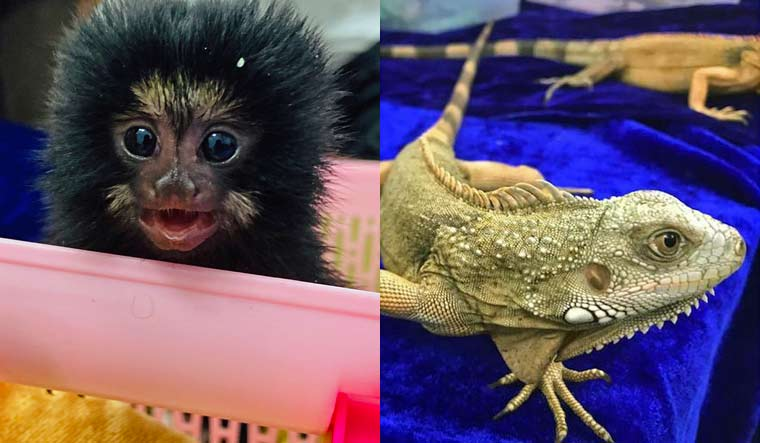 Chennai customs officials rescue exotic wildlife species from being smuggled
