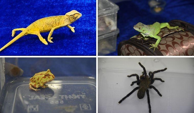 Rare wildlife species seized at Chennai airport, watch video